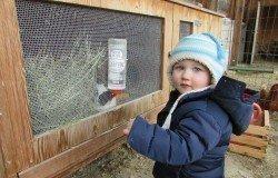 I bambini possono nutrire il coniglio